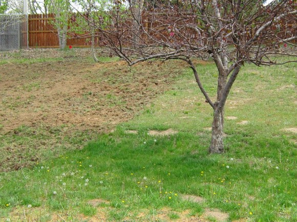 2015-05-04  Tilling the Backyard (2)