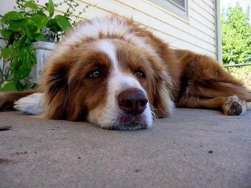 2016-03-28  A Dog's Life (1)