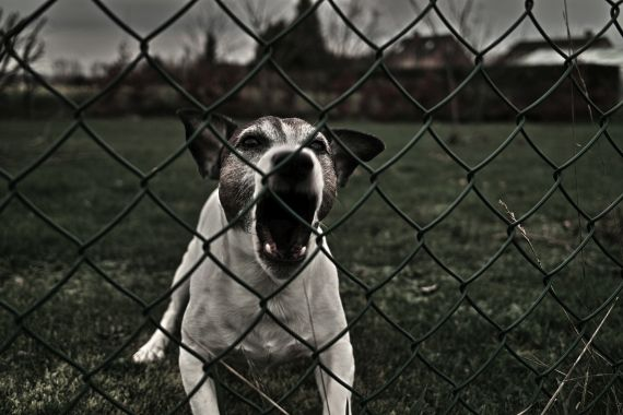 2016-03-28  A Dog's Life (3)